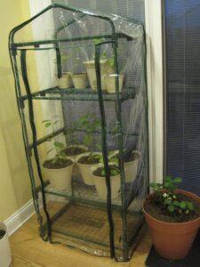 This is the original indoor greenhouse Optimistic Garden